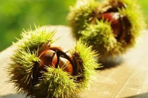 La castaña es el fruto por excelencia del otoño